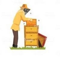 Travail au rucher